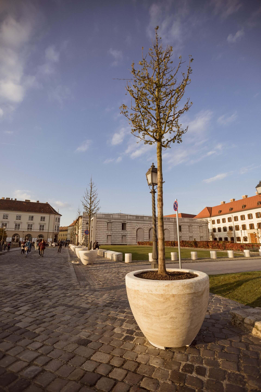 Díszfák a Szent György téren